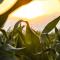 Mezőgazdasági munkás tanfolyam Mezőtúron